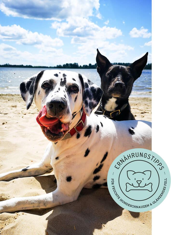 reico - reico hundefutter - reico hund - beratung hundefutter - futterberatung hund - ernährungsberatung hund